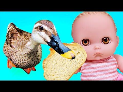 Куклы Пупсики гуляют в парке, кормим уточек. Смелые утки кушают с рук. Видео с игрушками. Зырики ТВ