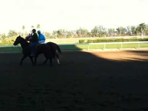 Horse racing at Hialeah park