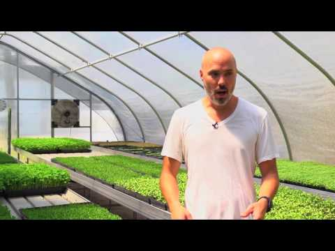 Good Water Farms, A Modern Microgreens Urban Farm