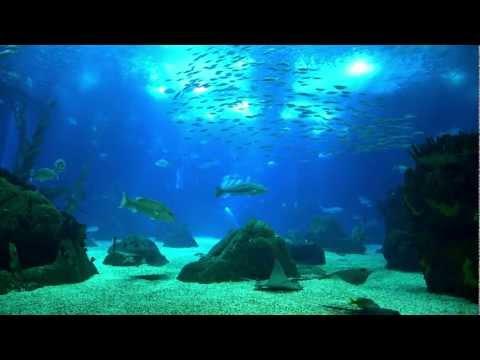Lumix LX7 Oceanarium Lisbon Low Light Video AVCHD 50fps