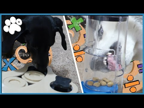 DOGGY IQ TEST! - How Smart Is My Dog?