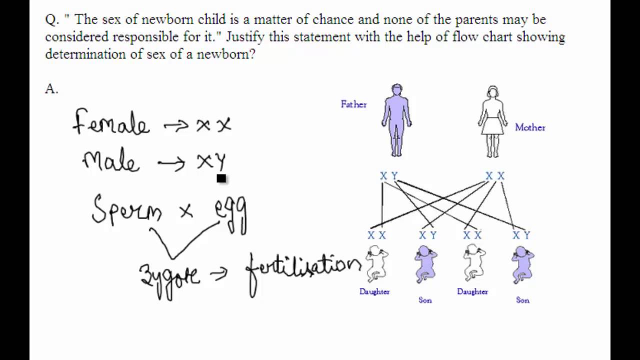 Cbse board papers class 10 2013 biology question 12 youtube cbse board papers class 10 2013 biology question 12 ccuart Image collections