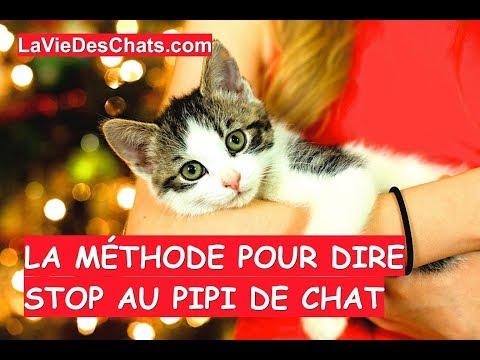 La Méthode Pour Dire Stop Au Pipi De Chat 🐱 Méthode 4/4