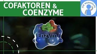 Cofaktoren & Coenzyme Enzyme einfach erklärt – Bildung & Beispiele – Stoffwechselbiologie