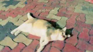 Very Playful Stray Cat has Cute Fur