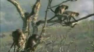 funny monkey sex