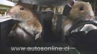 Llegó a Chile el Nuevo Kia Soul con Hamster de pilotos