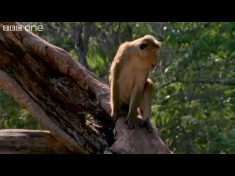 Funny Talking Animals - Walk On The Wild Side - Episode Four Preview - BBC One.flv