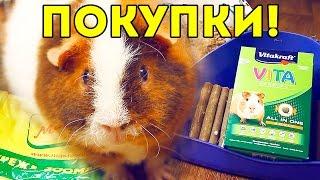 ПОКУПКИ из зоомагазина для морских свинок / SvinkiShow