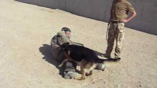 James Meets An Army Attack Dog.