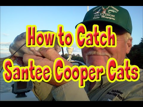 How To Catfish Tips On Santee Cooper Lake