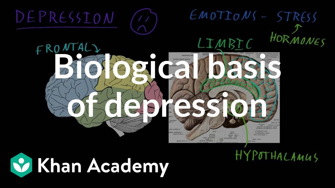 Biological basis of depression (video) | Khan Academy