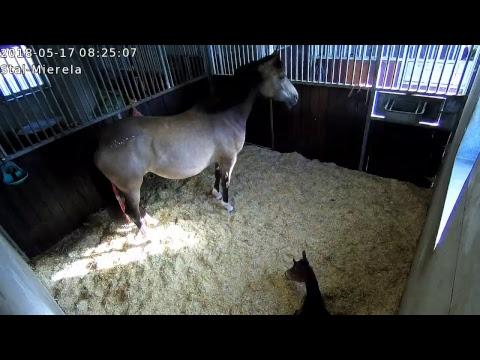 Mierela - Live Horse Cam