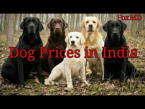 Dog Price List In India 2018