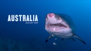AUSTRALIA 2019 | Diving with Sharks and Endemic Critters (4k)