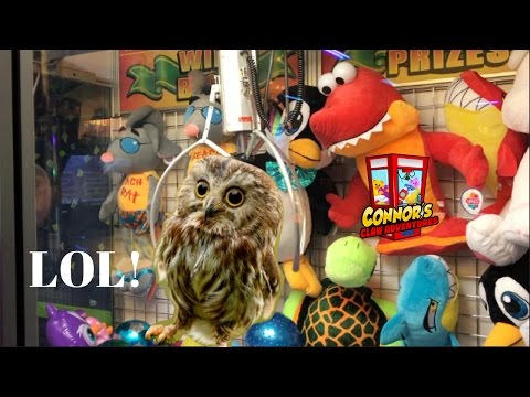 🦉Connor Wins Pet Owl from Claw Machine!!! Monopoly Too!🦉