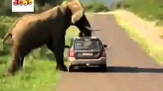 危機一髪!アフリカ象に車が潰されかける瞬間