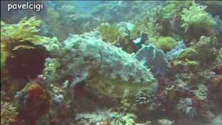 Diving, diving, diving ...  TNT Komodo, Indonesia.avi