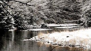 Bosques invernales - Rusia
