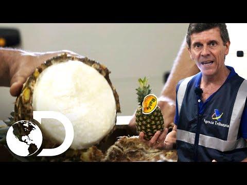 Abacaxis cheias de cocaína | Controle de Fronteiras | Discovery Brasil