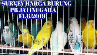 Survey Harga Burung di PB Jatinegara, 14.6.2019