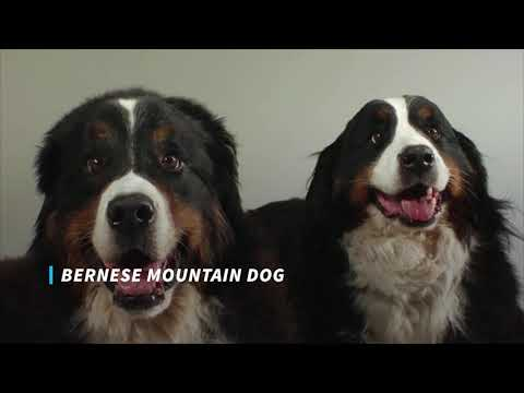 The most beautiful dogs in the world