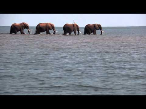 Kariba Elephant Crossing