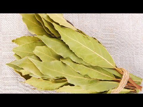 Burn A Bay Leaf For Weight Loss