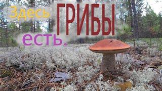 Грибы 4 августа 2021 Тихая охота Сбор грибов в Архангельской области