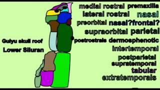 CVA: EVOLUTION OF THE VERTEBRATE SKULL: FRONTAL, PARIETAL BONES
