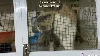 Mèo Nói Ngọc Ơi Mở Cửa