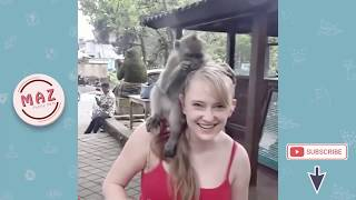 Monkey and Girl Best Funny - Funny Monkeys Doing Stupid Things - Funniest Animals Videos 2019