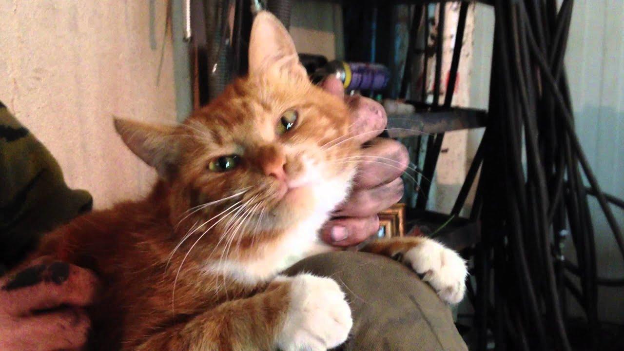 Почему когда кота гладишь он пускает слюни