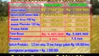 Budidaya Padi Organik Perhektar 15 TON