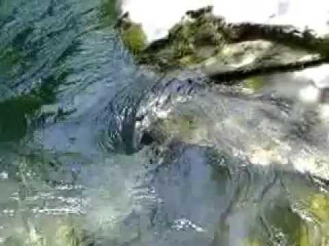 Il mulinello d'acqua in un torrente. - YouTube