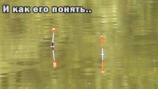 Этого карася науке не понять Рыбалка на поплавок в сентябре