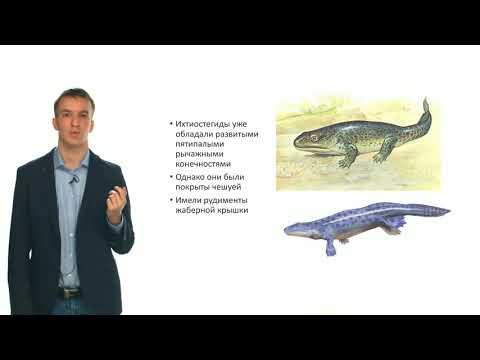 Зоология позвоночных. Эволюция позвоночных животных (Семенцов М. В.)