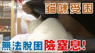 【豆漿 - SoybeanMilk】又見虐貓!? 豆漿差點被悶死在衣服裡!!