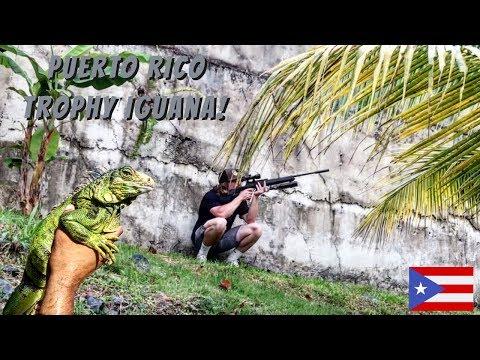 Puerto Rico Iguana Hunting!