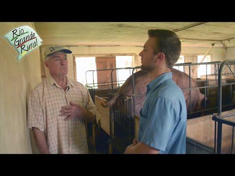 Emater responde: Dúvidas sobre criação de suínos da raça Duroc - Programa Rio Grande Rural