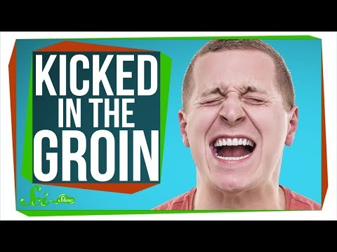 Why Does Getting Kicked in the Groin Hurt SO Much?