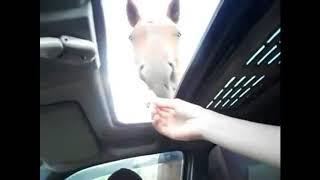 Привет конь ... Сам Конь  Наши любимые животные