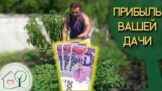 видео Севооборот овощных культур в огороде на приусадебном участке