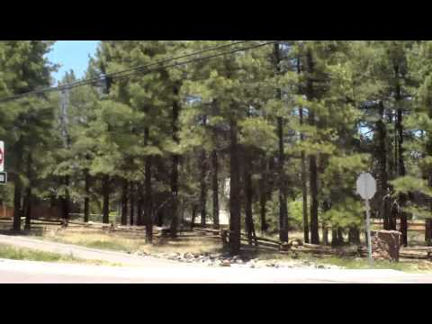 Flagstaff..Coconino National Forest..