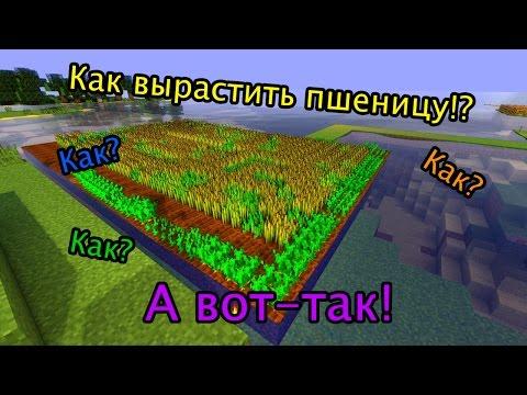 Майнкрафт Как сделать огород, и вырастить пшеницу