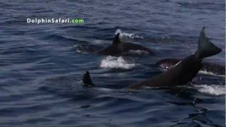 Amazing Underwater footage of Offshore Killer Whales taken from underwater viewing pod.mp4