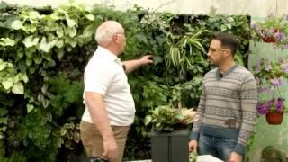 видео искусственное озеленение