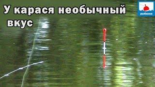 Эта необычная арома СРАБОТАЛА Рыбалка на карася на поплавок Рыбнадзор лютует