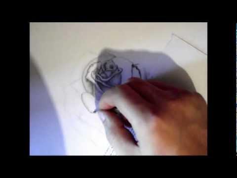 Биология роза