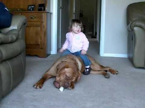 Dogue De Bordeaux And Baby Youtube